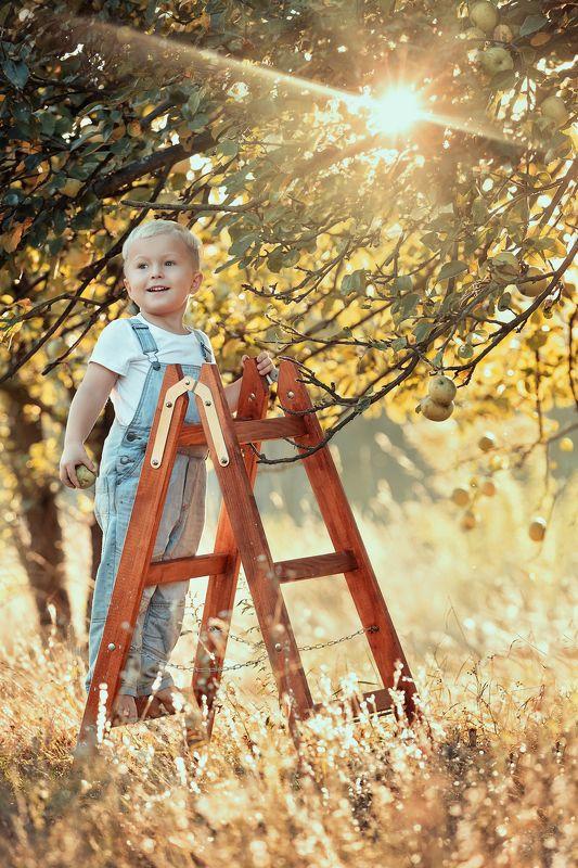 boy, apple, garden, sun, summer, autumn, happy boy in a apple gardenphoto preview