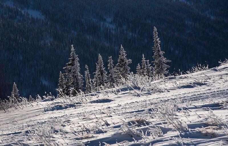 снег, иней, мороз, солнце, зима, пихты, ёлочки, гора зелёная, шерегеш, горная шория, сибирь Pro «ёлочки» Шерегешаphoto preview