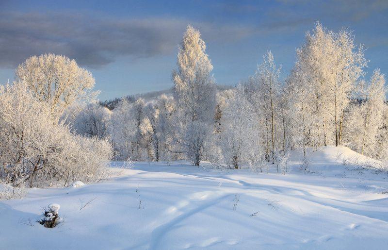 В зимнем  нарядеphoto preview