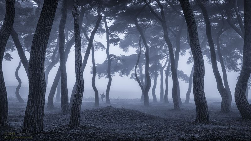 photographer pinetree tree wave fog misty morning landscape Korea before the dawnphoto preview