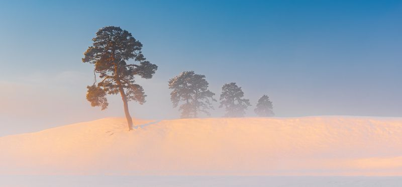 panorama, hill, sunrise, winter, snow Pine treesphoto preview