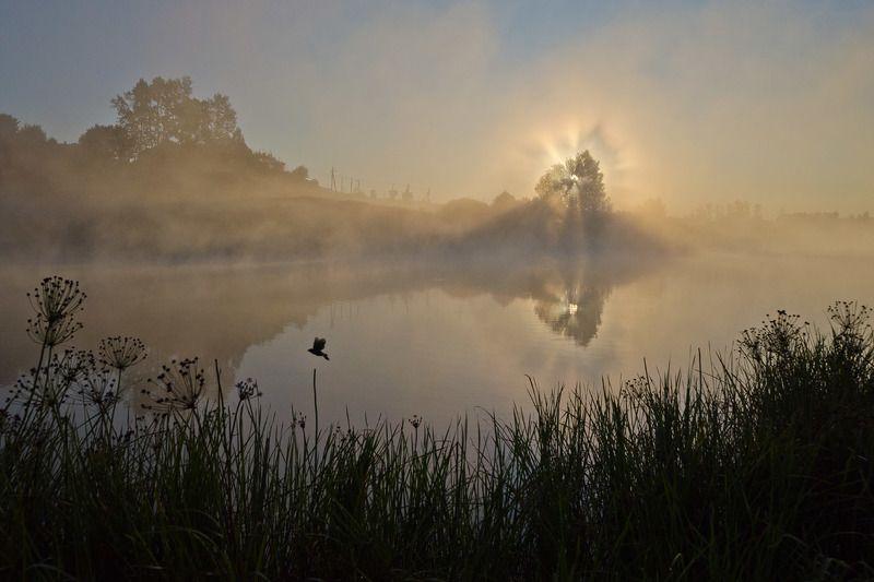 утро, пейзаж, туман, рассвет, архангельское Воспоминание о рассветеphoto preview
