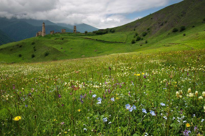 Цветы и горы. Ингушетияphoto preview