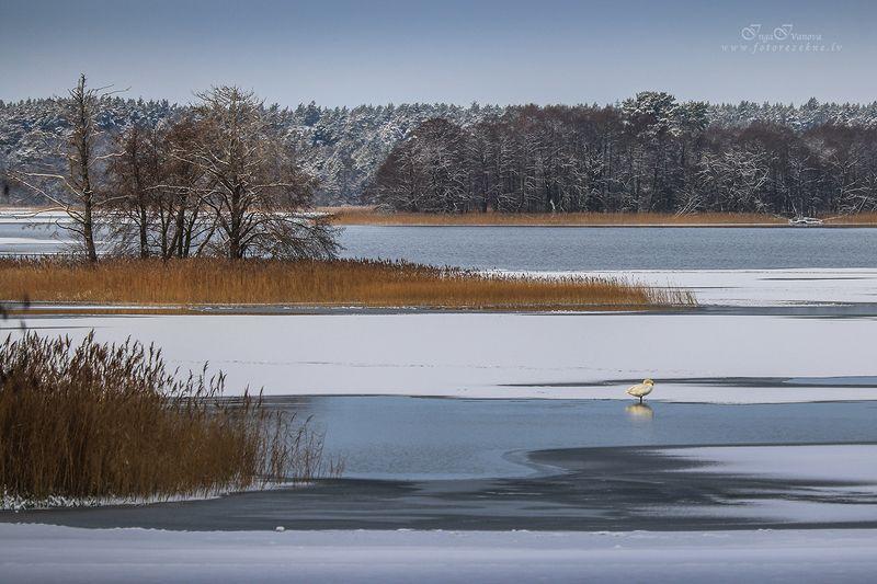 лебединого озера Зимние линии лебединого озераphoto preview