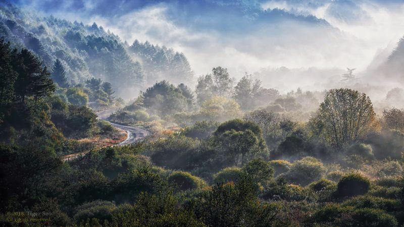 mountain fog misty trees forest morning sunrise landscape Korea Secret gardenphoto preview