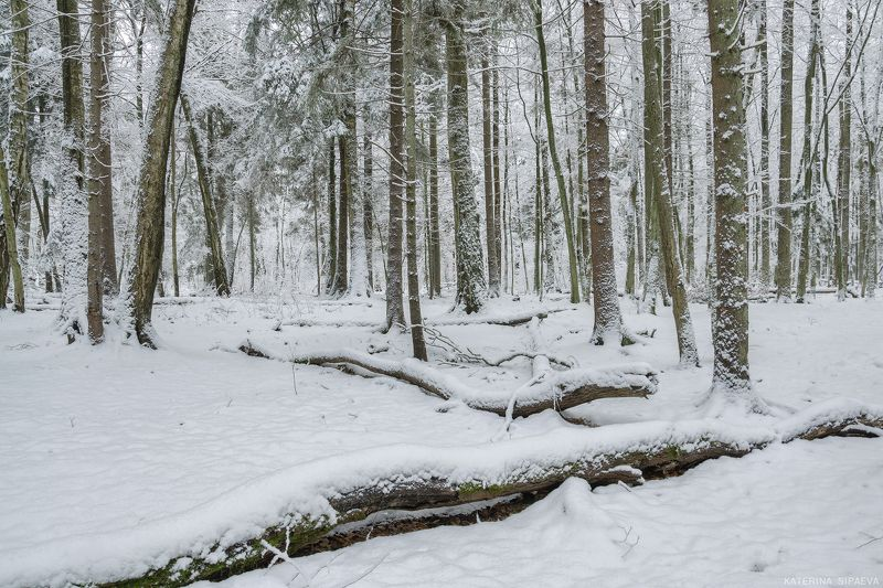 природа,пейзаж, лес, зима День волшебной зимыphoto preview