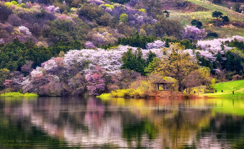 flower mountain trees water waterside reflection spring Korea landscape color of mountainphoto preview