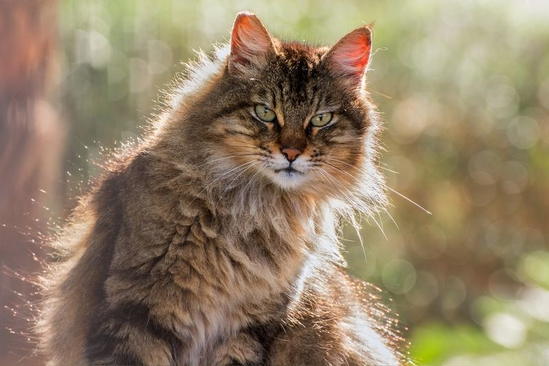 кошка, декабрь, утро Лучезарнаяphoto preview