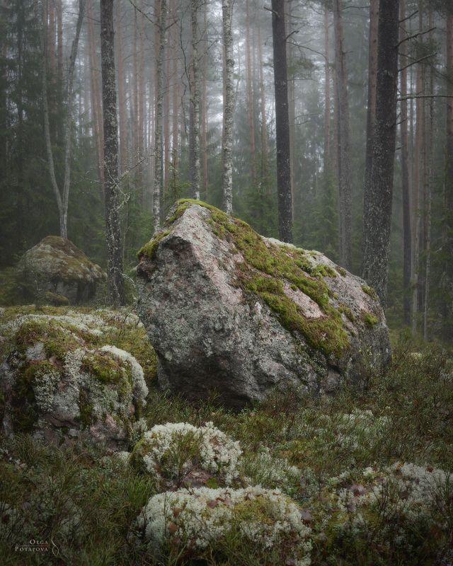 ленинградская область, туман, выборгский район, гвардейское, лес, тайга, чаща, камни, карельский перешеек Алтарьphoto preview