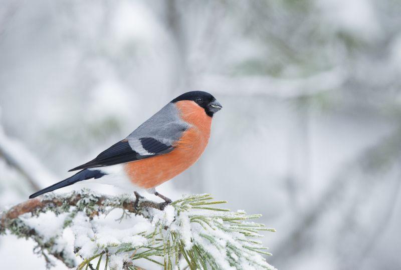 Символ зимыphoto preview