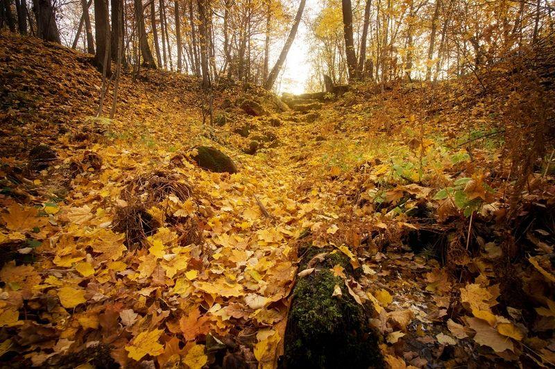 Ручей засыпанный листвойphoto preview