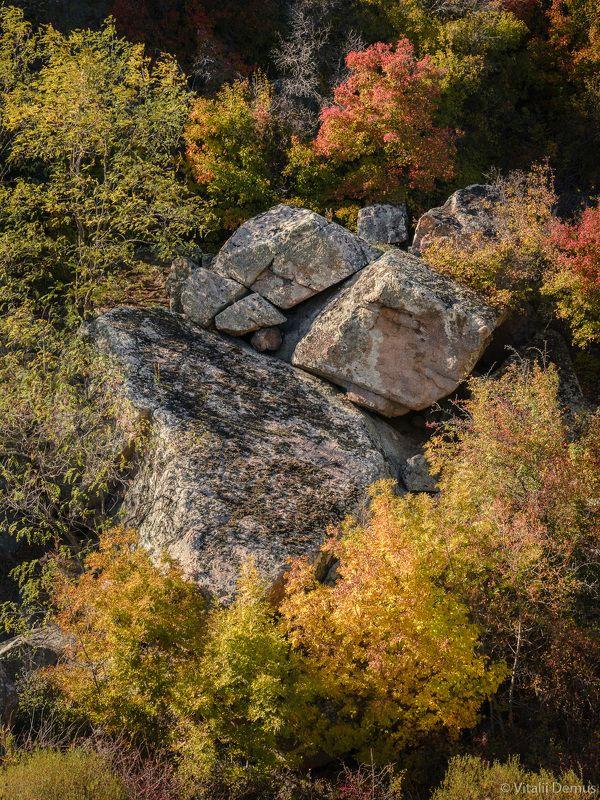 осень, закат, деревья, камни, желтый, контраст, вертикальный, природа, скалы, листва Камни среди деревьев. Осень в Актовском каньоне.photo preview