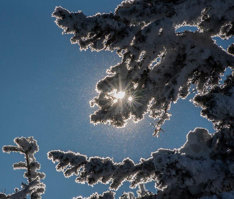 снег, иней, мороз, солнце, лучи, звёздочки, зима, пихты, гора зелёная, шерегеш, горная шория, сибирь Pro Новогодние бокешкиphoto preview