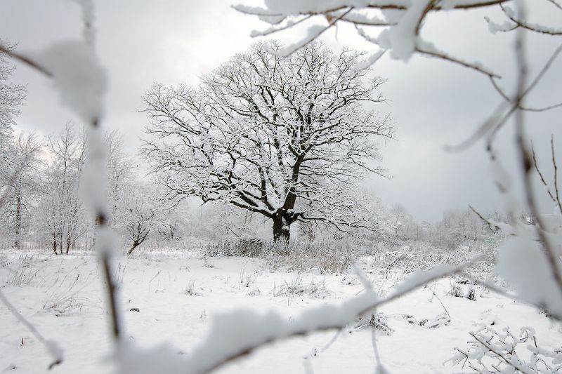 зима, пейзаж, окошко Окошко в зимуphoto preview