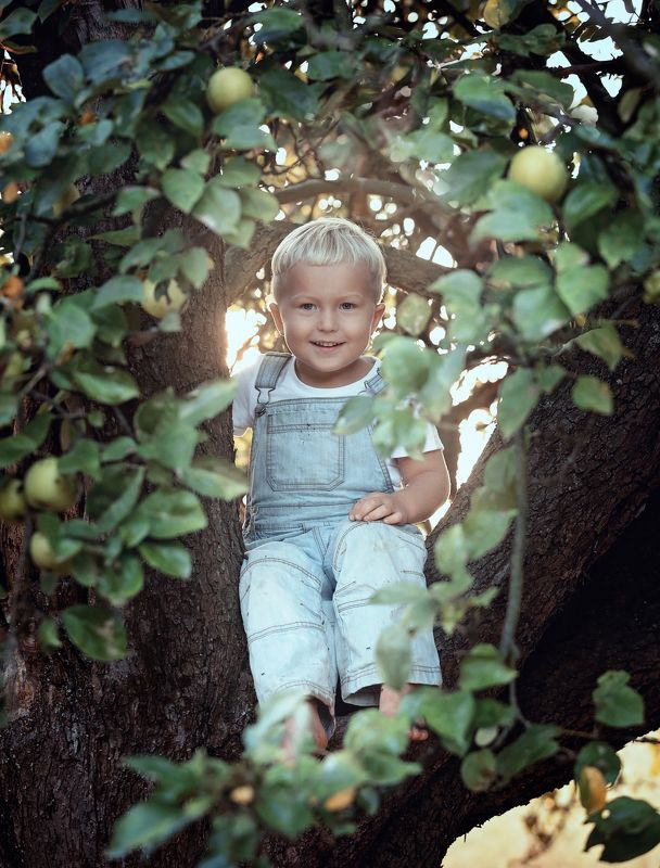 apple, apples, garden, boy, tree, summer, autumn Boy sitting on apple treephoto preview