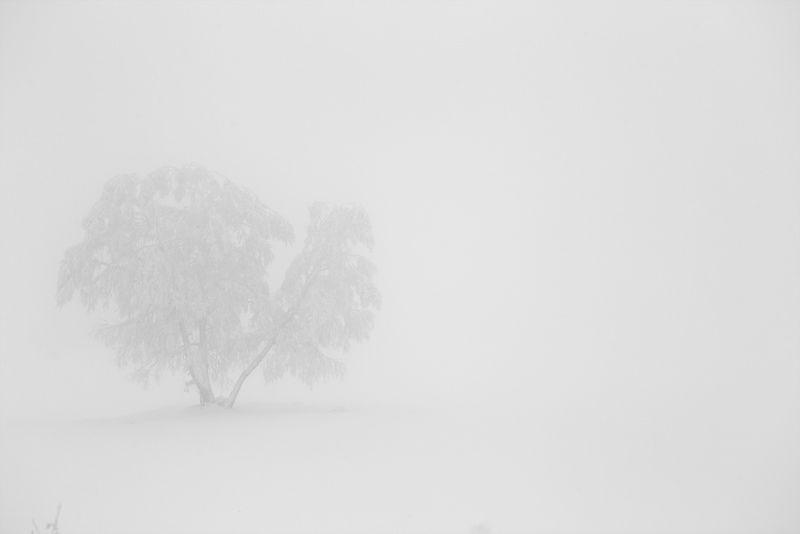 Белая тишинаphoto preview