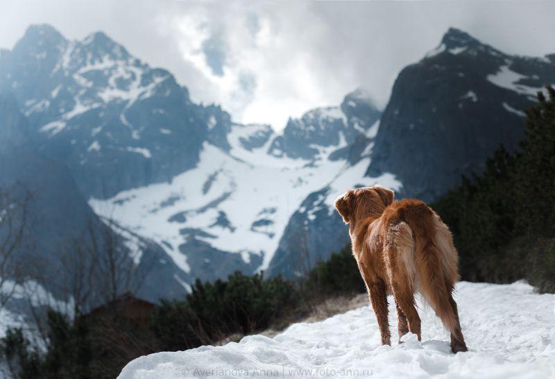 собака, природа в горахphoto preview