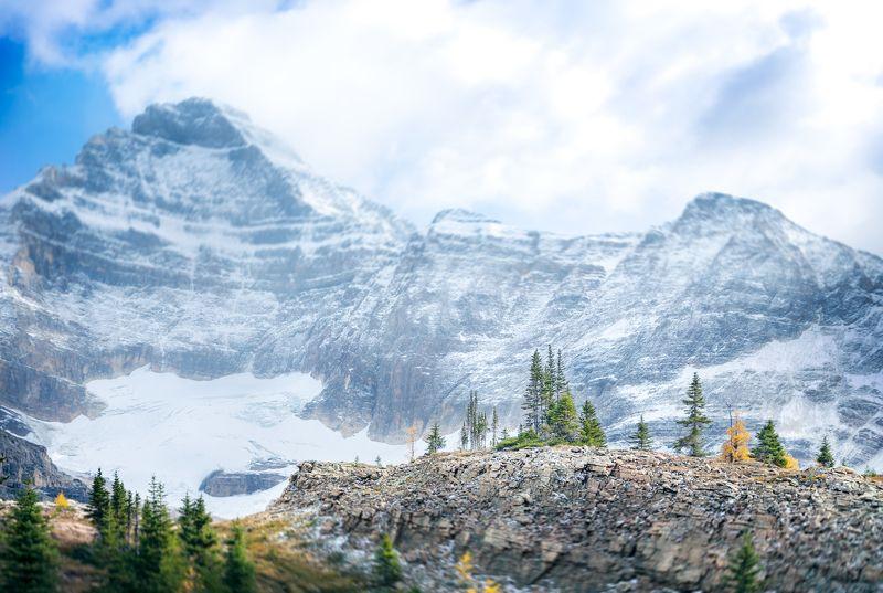 канада, йохо, национальный парк, гора биддл, пейзажи, природа, лиственница, деревья, канадские скалистые горы, осенний сезон, британская колумбия, британская колумбия, canada, yoho, national park, mount biddle, landscapes, nature, larch, trees, canadian r Rocky icebergsphoto preview