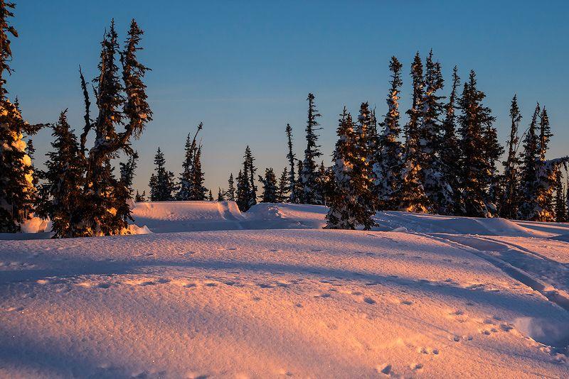 утро, сумерки, снег, сосульки, мороз, солнце, зима, пихты, ёлочки, гора зелёная, шерегеш, горная шория, сибирь Pro апьсиновое утро на горе Зелелёной)photo preview