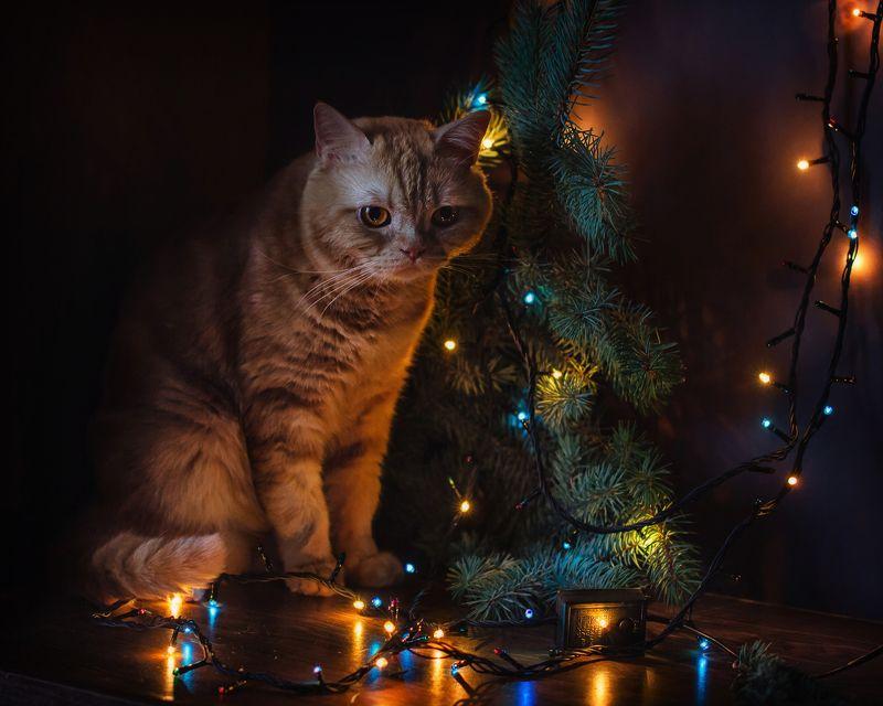 животные, кошки, кот, новый год, праздник, ёлка, огоньки Мой любимый новогодний поросёнок :)photo preview
