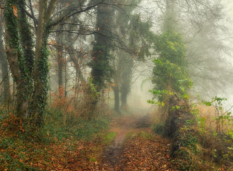 меланхолия melancholy alley foggy morning silence mist magic path road trees dranikowski autumn fall меланхолияphoto preview