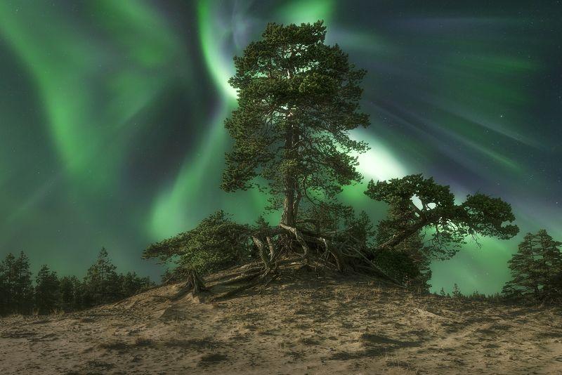 Северное сияние, Кольский полуостров, aurora Borealis В песках Кузомениphoto preview