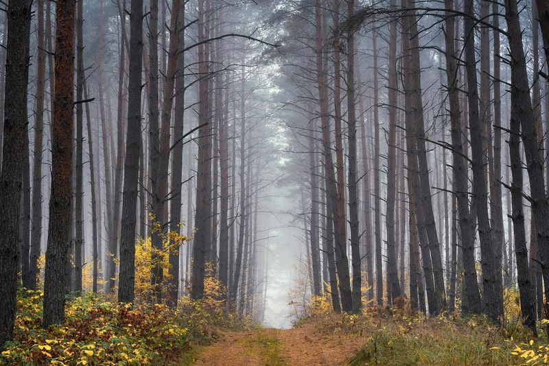 uphill in the forest tree trees magic mist foggy morning path road dranikowski fog autumn fall Uphill in the forestphoto preview