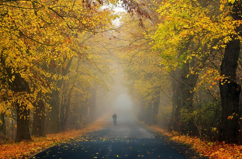 велосипедист autumn rider fall road path magic trees tree dranikowski foggy mist cyclist велосипедистphoto preview