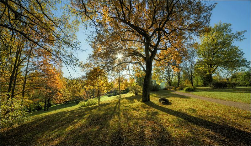пейзаж,природа,дерево,осень,парк,свет,тени Осень в Павловске.photo preview
