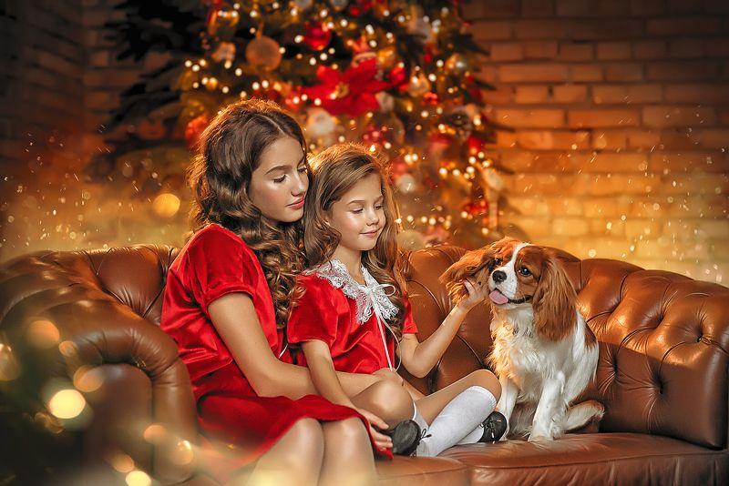 рождество, сестры, пес, праздник, детство, друг, подарок Друг в подарокphoto preview