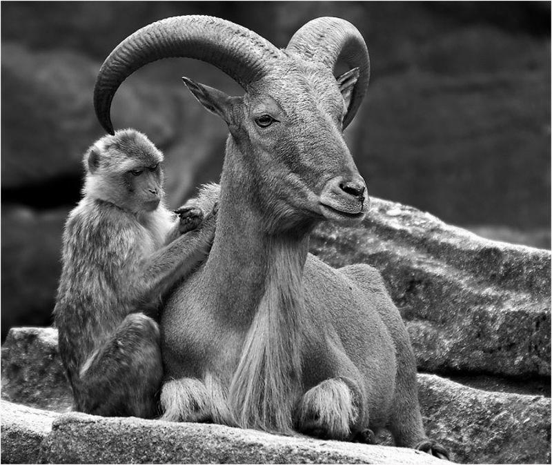 животные жизнь без людейphoto preview