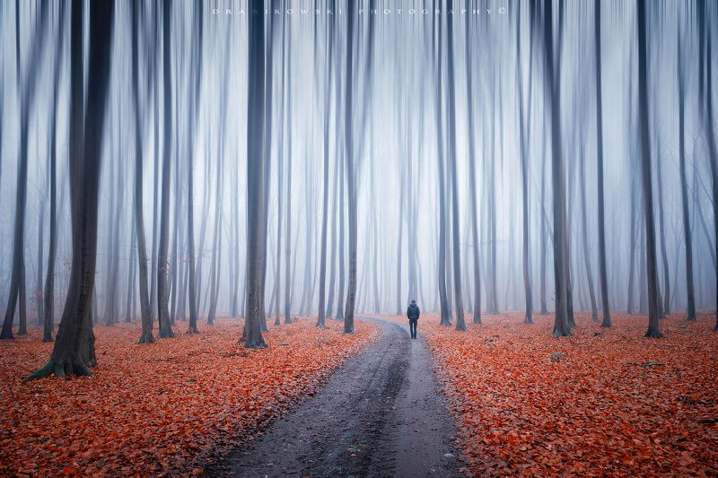 a man alone with himself sam dark forest trees path road mist magic dranikowski foggy morning autumn fall A man alone with himselfphoto preview