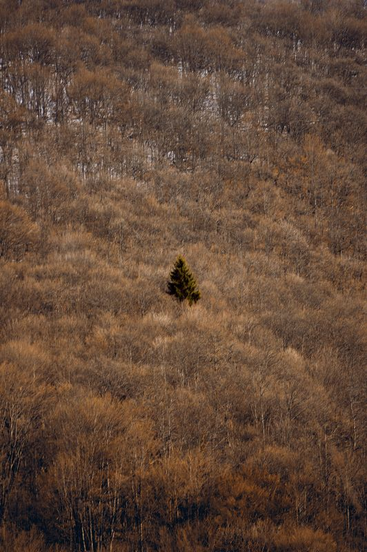 serbia, nature, forest, mountain, slope, tree, alone, isolated, separated, сербия, природа, лес, гора, склон, дерево, один, изолированный, отделенный, Destinyphoto preview