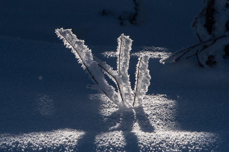 снег, иней, мороз, солнце, зима, пихты, рябина, гора зелёная, шерегеш, горная шория, сибирь Рождественское макроphoto preview