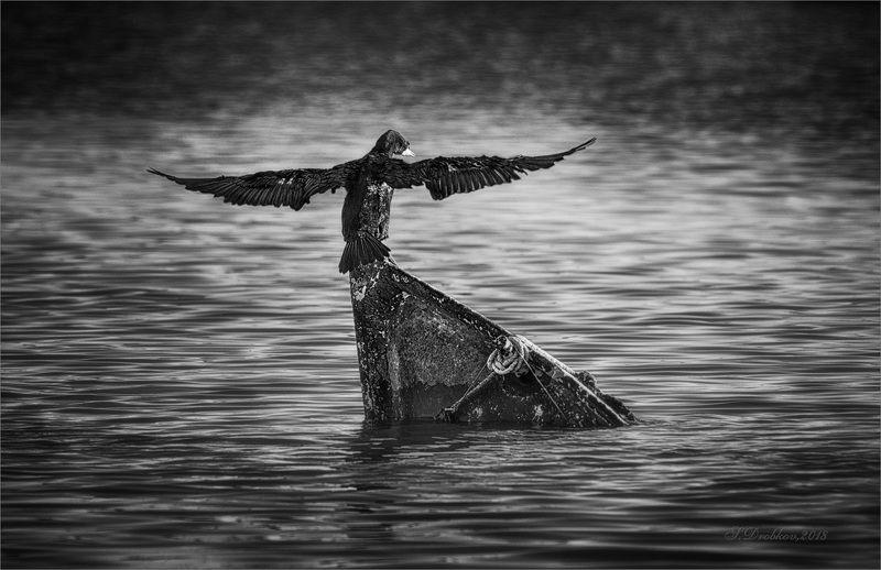 баклан, лодка, вода, закат, фауна Хрупкое равновесиеphoto preview