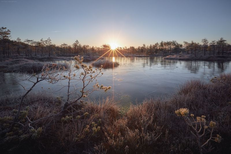 болото, иней, лёд, восход Утренний мороз на болоте.photo preview