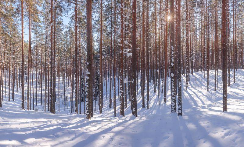 пейзажи ленинградской области, вярямянселькя, озовая гряда, камовые холмы, зима в ленинградской области, март. \
