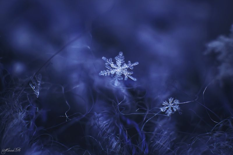 снег, снежинки, макро ...И пусть снежинки падают с небес...photo preview