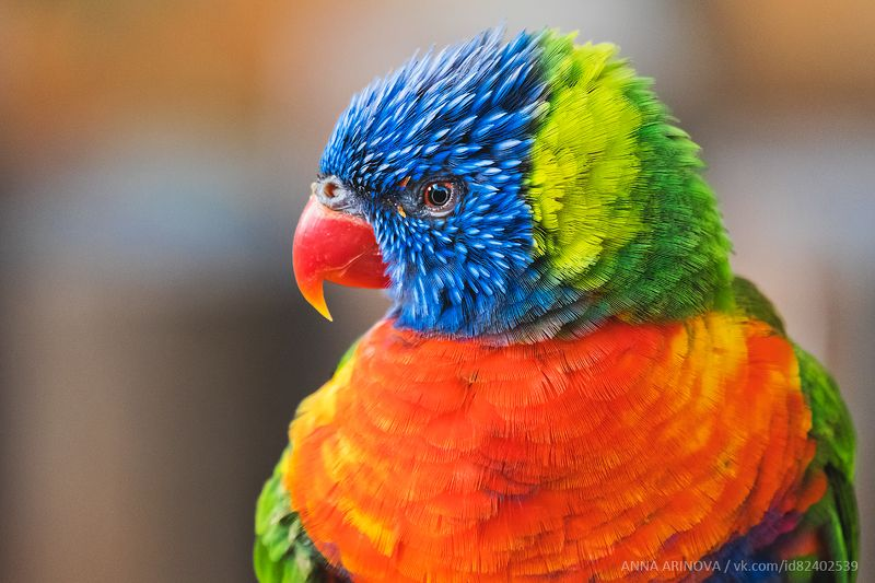 Parrotphoto preview