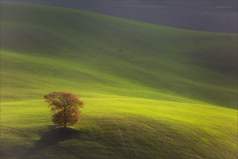 italy,san quirico d\\\'orcia,italia,свет,пейзаж,италия,тоскана,дерево,toscana,зима,tuscany,минимализм Одинокое дерево фото превью