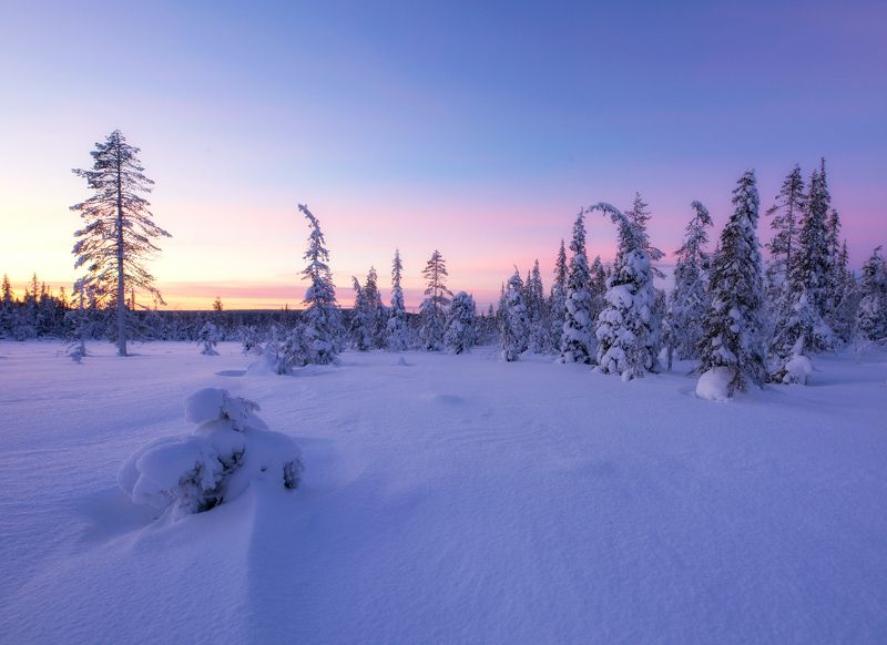 lapland, finland, winter, sunset Magical Winter in Laplandphoto preview