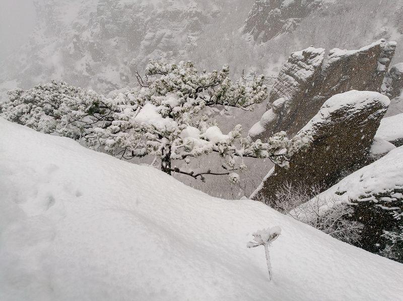 Снегопад на Демерджи.photo preview