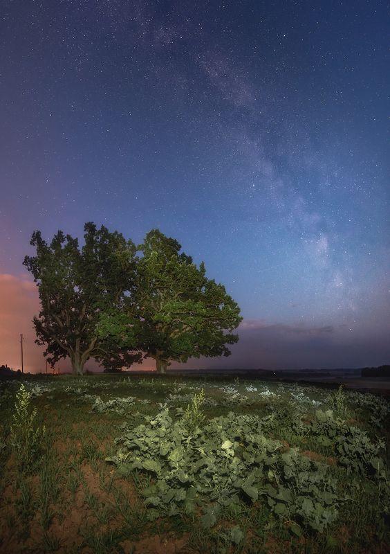 ночь млечный путь латвия пейзаж небо Воспоминания о летеphoto preview