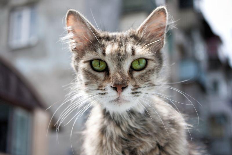 кот, кошка, усы, морда, глаза, взгляд hypnosisphoto preview
