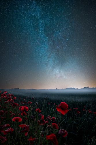 Poppies and stars