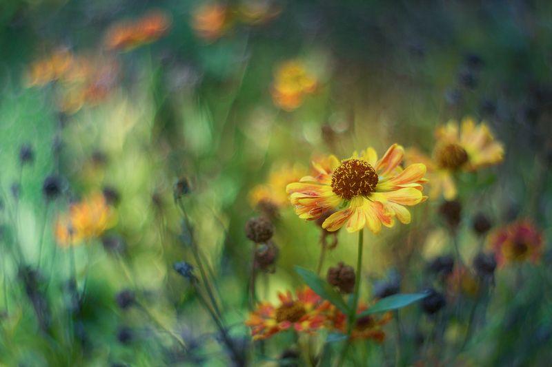 kwiaty,polne,lato,bokeh,martwa natura, flowers, nature, still live ...photo preview