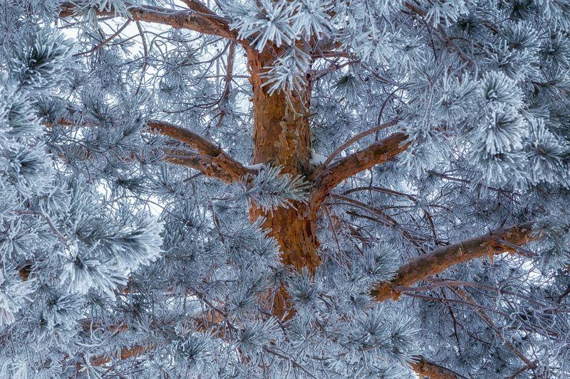 Бархатная зимаphoto preview