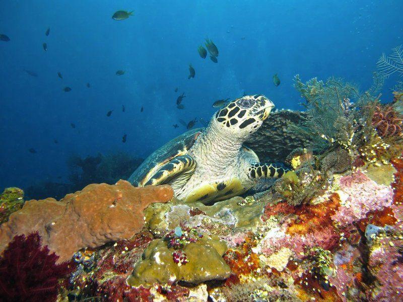 кораллы , подводная фотография , underwater , Очарованиеphoto preview