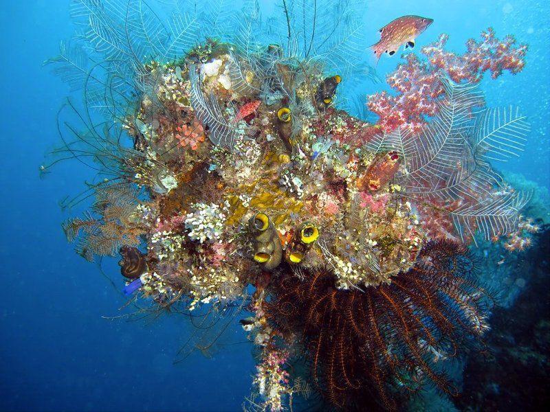 кораллы , подводная фотография , underwater , Подводный букетphoto preview