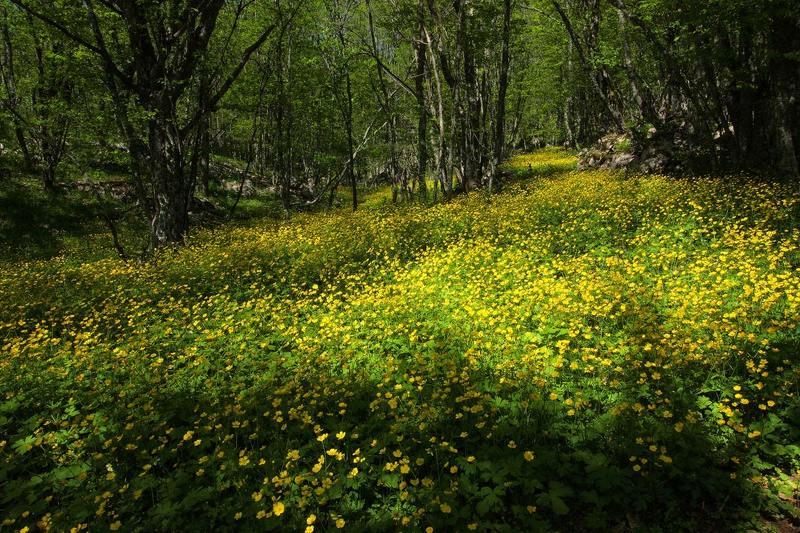 крим, урочище, карадагський, ліс Квітучий Кримphoto preview